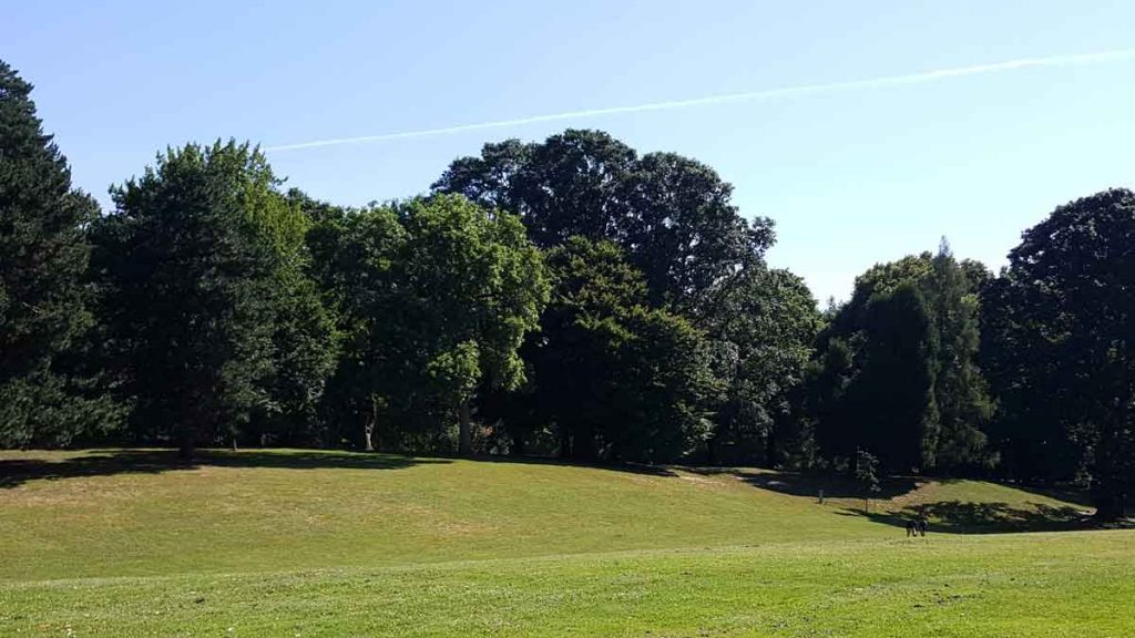Fernhill Park field and forest